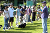 CARVER KENNEL Dog Training | CGC Training